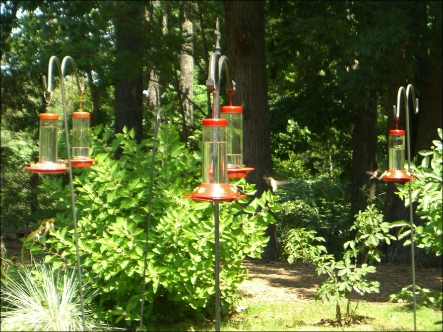 Hummingbirds at the Woodlands Nature Station, Land Between the Lakes