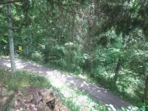 Pennyrile Forest State Resort Park Trail