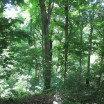 Trails Behind the Audubon Museum and Nature Center