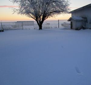 Winter morning in Kentucky February 2015