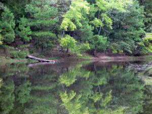 Cedar Pond, Land Between the Lakes