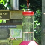 Hummingbirds at The Nature Station LBL