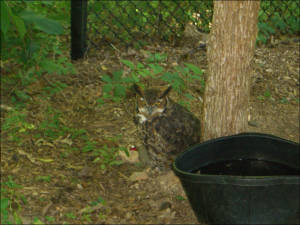 One of the beuatiful owls at the Nature Station