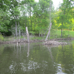 Beaver Lodge on Honker Lake