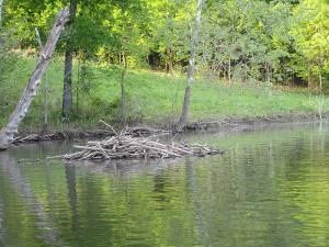 Beaver Lodge on Honker Lake