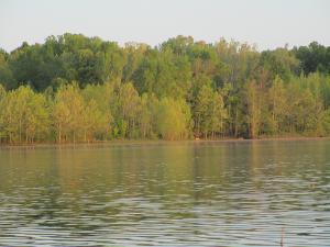 Deer in the Distance on Honker Lake