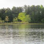 Geese on Honker Lake