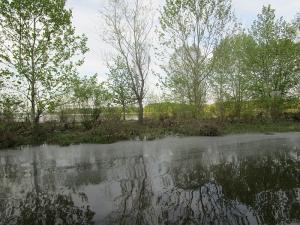 Reflection of Trees on Honker Lake