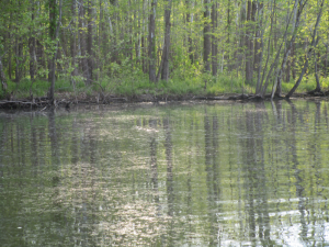 Snake in the Water Making a Break for It!