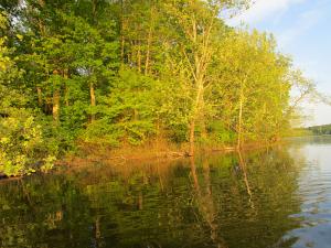 Trees Reflecting on Honker Lake LBL