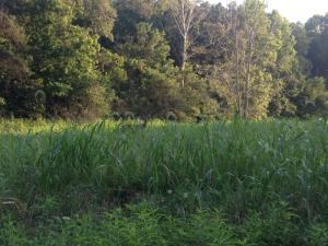 Deer near Sugar Bay, Land Between the Lakes KY