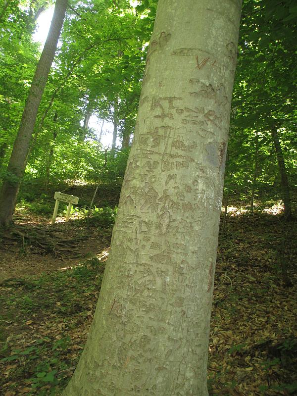 John James Audubon State Park (Human Impact Tree)