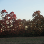 Autumn Trees near Sunset