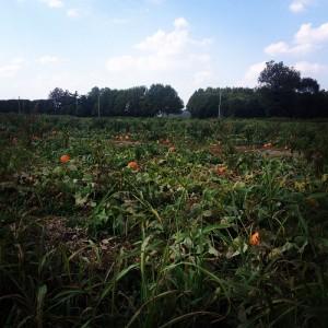 Pumpkin Patch in Owensboro, Kentucky