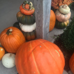 Pumpkins at Trunnell's Farm Market in Utica - Near Owensboro, Kentucky.
