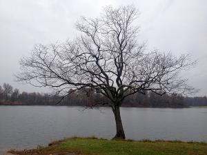 Beautiful Tree Madisonville City Park