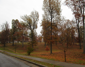 Driving Into Madisonville City Park