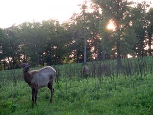 Elk and Bison Prairie