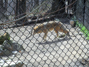 Coyote Woodlands Nature Station