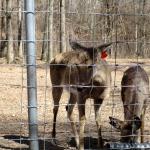 Deer at Woodlands Nature Station