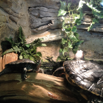 Turtles Indoors, Woodlands Nature Station