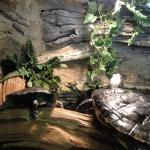 Turtles Indoors, Woodlands Nature Station