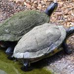 Turtles Woodlands Nature Station