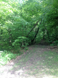Center Furnace Trail in the Land Between the Lakes