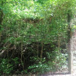 The Cistern - Center Furnace Trail in the Land Between the Lakes