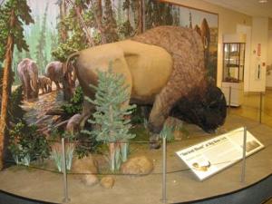Ancient Bison Display at Big Bone Lick State Historic Site