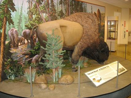 Ancient Bison Display at Big Bone Lick State Historic Site