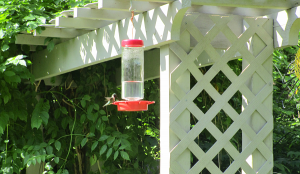 Hummingbird at the Nature Station in the LBL