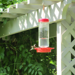 August is Hummingbird Month at Woodlands Nature Station in the Land Between the Lakes