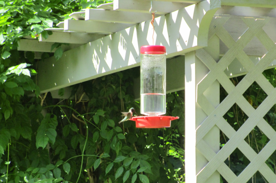 Hummingbird at the Nature Station in the Land Between the Lakes