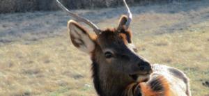 Elk & Bison Prairie