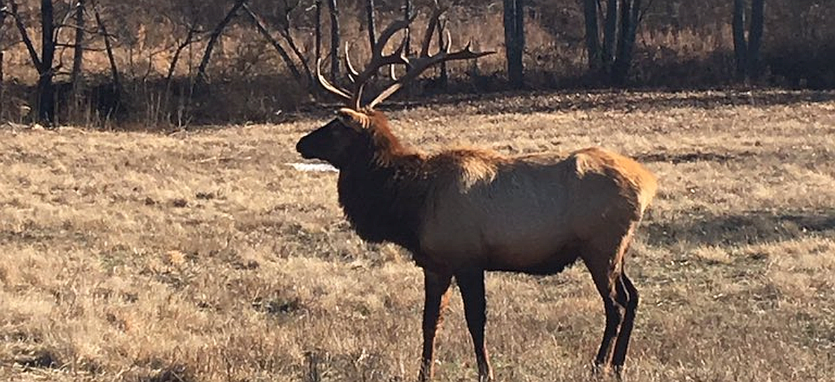 The Elk and Bison Prairie: Winter Is a Wonderful Time to Visit