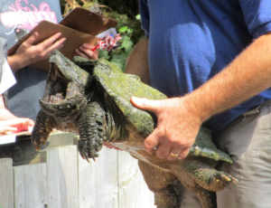 Alligator Snapping Turtle Nature Station, Land Between the Lakes