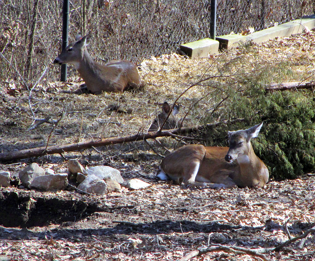 Deer at the Nature Station