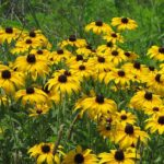 Carter Caves State Resort Park: Wildflower Pilgrimage April 21-22, 2017