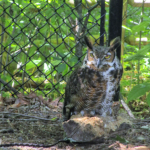 Wildlife Celebration at Woodlands Nature Station: May 27-29, 2017