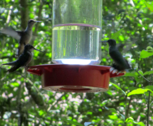 Hummingbirds at Woodlands Nature Station in the Land Between the Lakes